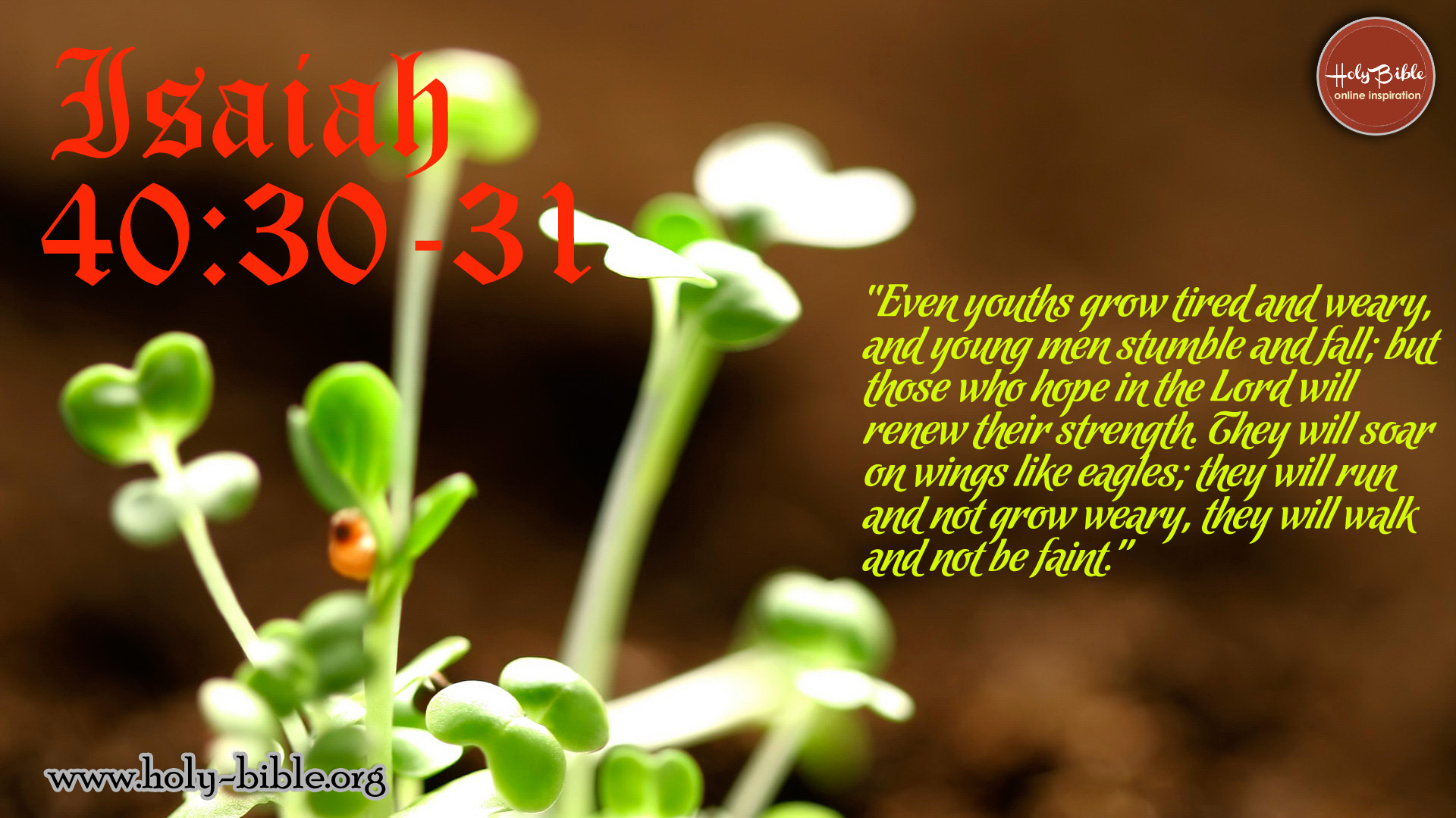 Bible Verse of the day - Isaiah 40:30-31
